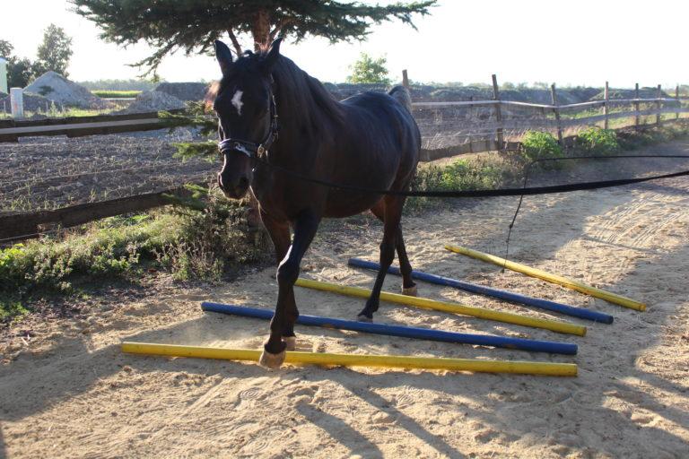 Warum Pferde longieren?